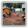 Stump grinding in Kendall, FL