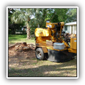 Stump grindging and removal in Pinecrest. FL