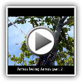 JA Roman Tree Service: James being James part two